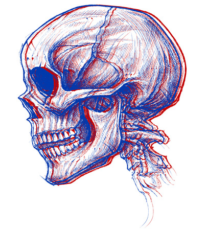 Skull 3D Illustration