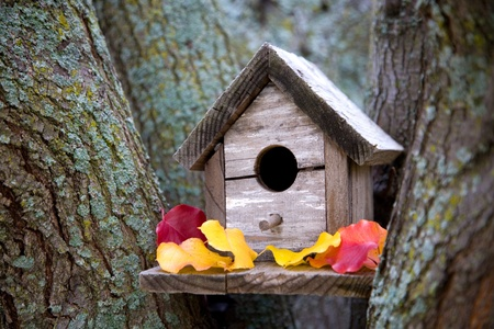 A cozy birdhouse in a tree in the fall with colorful leaves.