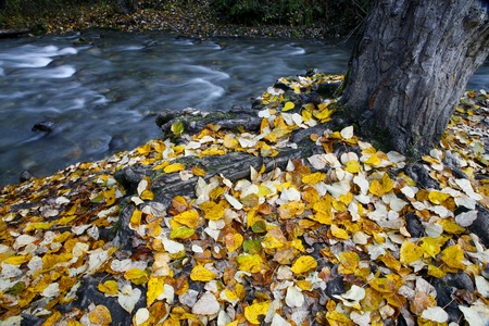 Fall colors near a freshwater stream in Alaska.