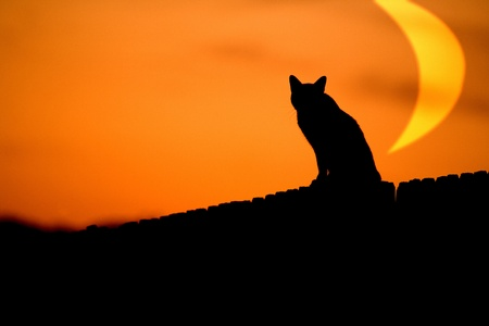 A cat on the prowl with an oversized moon in the background. Stock Photo