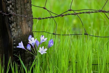 Spring wildflowers in bloom near burned fencepost.