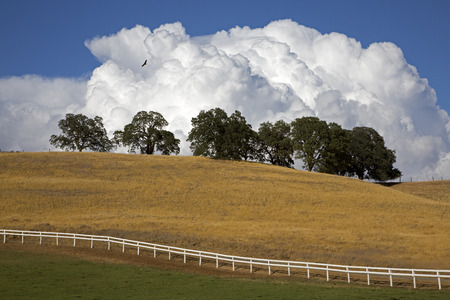 A bird soars high over a country scene with cumulus clouds in the background Stock Photo