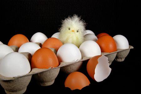 chick in eggs Banco de Imagens