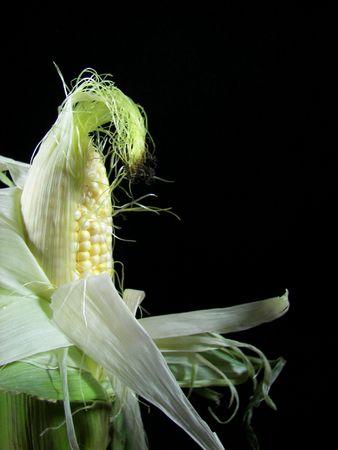 옥수수 속에서 껍질을 벗긴 옥수수 스톡 콘텐츠 - 3101505