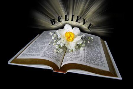 dainty: daffodil on holy bible  Stock Photo