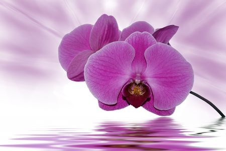 dainty: brilliant pink orchids Stock Photo