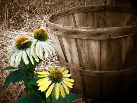 cone flowers with bushel basket