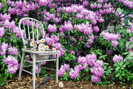 Old chair used as a flower pot holder in garden. Stock Photo - 3176938