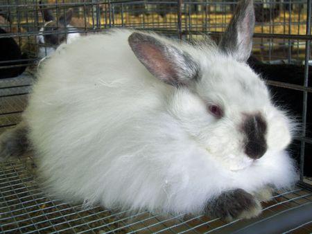 rabbit cage: Fuzzy coniglio da compagnia in gabbia.