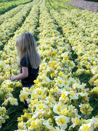 day lily: Blond child in day lily field. Stock Photo