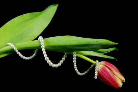 String of pearls wrapped around a tulip.