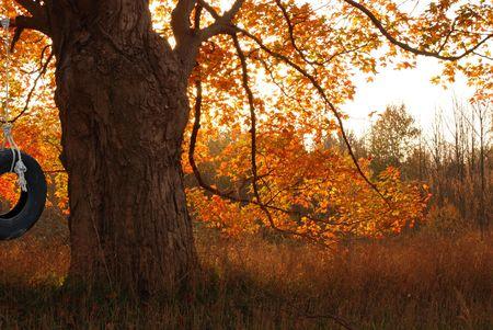 old glory: Tire swing in old oak tree. Stock Photo
