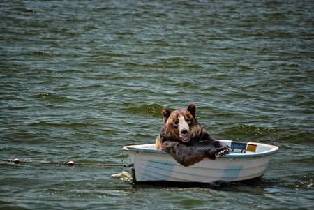 Happy bear in a dinghy.