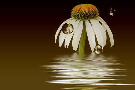 Cone flower reflected in bubbles on gradient background. Stock fotó