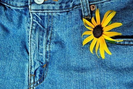 Single black-eyed susan in a jean pocket. Stock Photo - 3321321