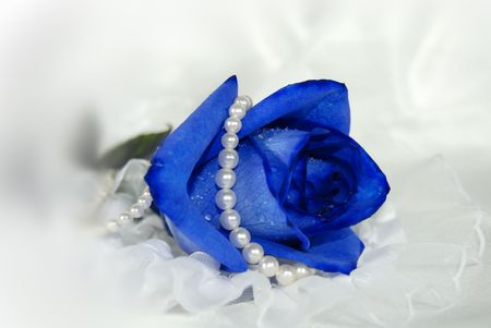Blue rose wrapped in pearls on lace.