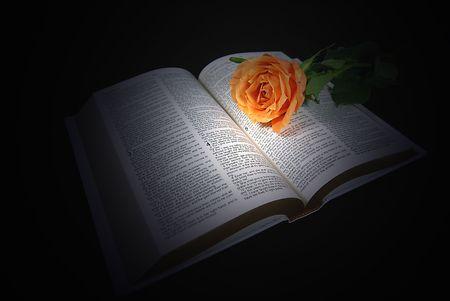Illuminated orange rose on the Holy Bible.