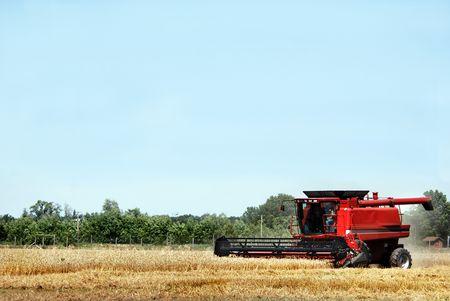 winter wheat: Modern harvester in a winter wheat field.