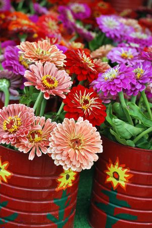 Bouquets of colorful dahlias. Stock Photo - 3425439