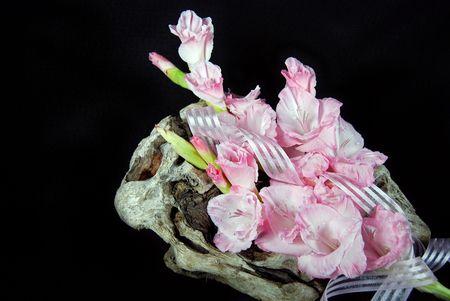 Pink gladiolas on driftwood. photo