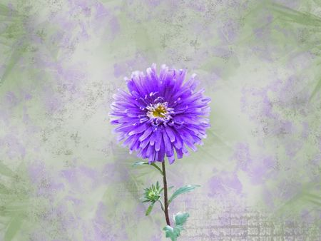 Lavender dahlia on a grunge background.