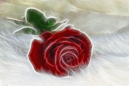 Red velvet rose on white fur with fractal effect.