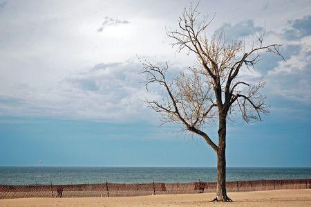 beechwood: Beechwood tree on beach with snow fence. Stock Photo
