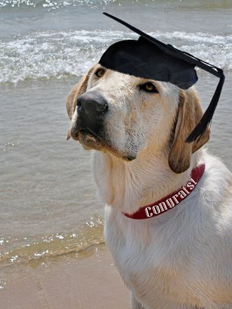 Young pup with a graduation hat on the beach.