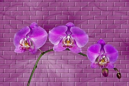 dangle: Orchid blooms on a brick background. Stock Photo