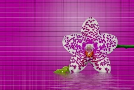 Fancy orchid blossom on brick background. Stock Photo - 4085450