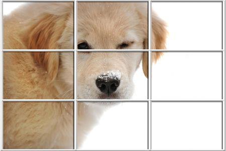 windows frame: Golden retriever pup peeking in a window. Stock Photo