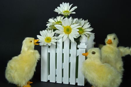 Ducklings with bouquet of daisies. Stock fotó