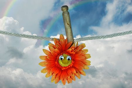Orange daisy hanging on a clothesline with old wooden pin. photo