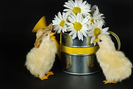 Ducklings with daisy bouquet in sprinkling can.