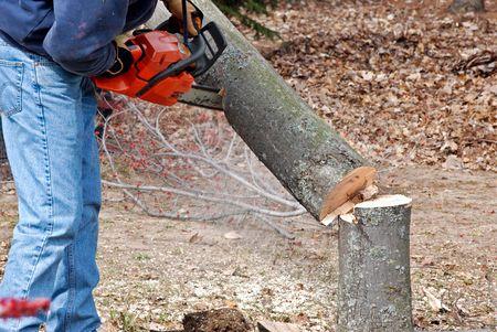 L'homme en utilisant une scie � cha�ne pour abattre un arbre. Banque d'images - 4676110