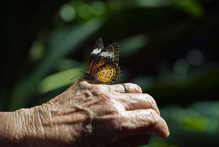 女性の手に熱帯の蝶。