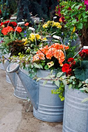 sprinkling: Row of sprinkling cans filled with summer flowers. Stock Photo