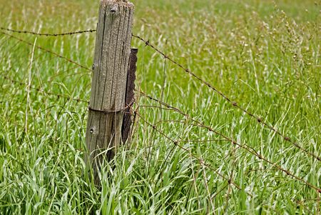 Old fence post with a barb wire fence. photo