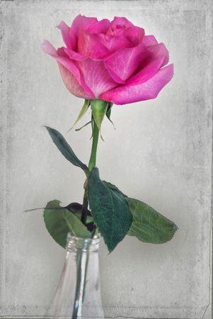 Summer rose in a bottle. Stok Fotoğraf - 5091463