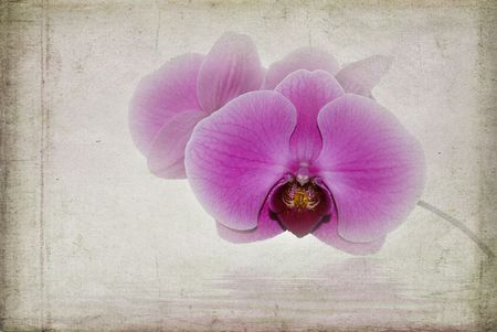 Faded pink orchid blossoms on textured background.