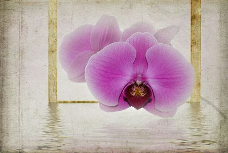 Framed orchid with reflection in textured effect.