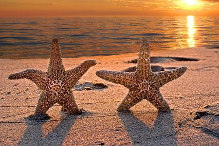 Starfish couple on the beach at sunset.