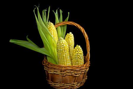 Sweet corn in a wicker basket. photo