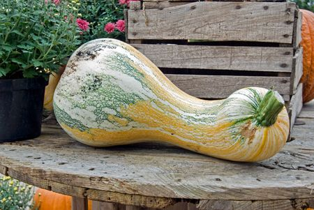 oversized: Oversized gourd on an old table.