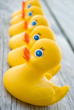 fila: Patos de goma amarillo en una fila.