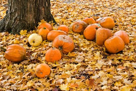 rotting: Last of the fall pumpkins rotting under a maple tree. Stock Photo