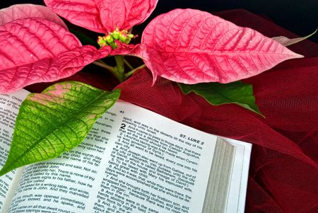 Open Holy Bible with a poinsettia blossom. photo