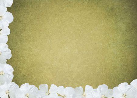 White hibiscus border on textured background.
