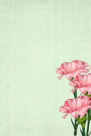 Pink carnation bouquet on soft green background.