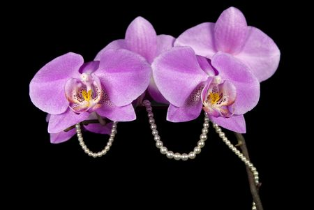 exotic gleam: String of pearls wrapped around orchid stalk.